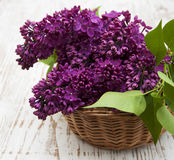 Summer lilac flowers in basket Stock Images