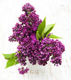 Summer lilac flowers in vase Stock Photography