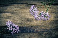 Summer lilac flowers on vintage wooden background Stock Image