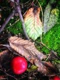 Summer. Litter tree feet like a painting Stock Image
