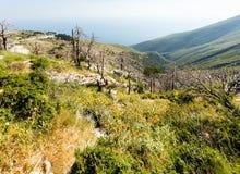 Summer  Llogara pass (Albania) Stock Images