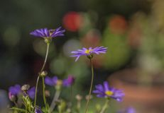 Summer in London, sunny day - violet flowers with a bright background. This image shows a view of one of the parks in London, England, the UK. It was taken on a royalty free stock image