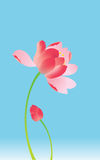 Summer lotus Stock Photography