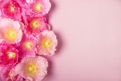 Summer mallow flowers pink background. Minimalism beauty holiday. Concept Stock Photos