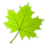 Summer Maple Leaf Low Poly Stock Photos