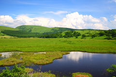 Summer marshland. Pond in japan royalty free stock photos