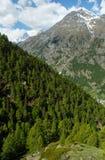 Summer Matterhorn mountain (Alps) Stock Photography