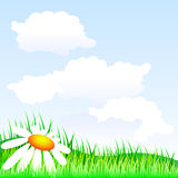 Summer meadow. A summer meadow. Vector background Royalty Free Stock Images