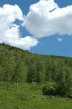 Summer Meadow. Aspen woods and clearing in mountains Stock Image