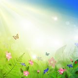 Summer meadow. With flowers and sun shine Stock Images
