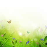Summer meadow. With flowers and sun shine Royalty Free Stock Photos