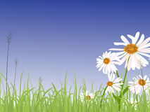 Summer meadow. Illustration of marguerites on a green meadow Stock Photo