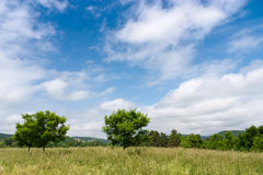 Summer Meadow. A meadow on a summer day with blue skies and clouds Stock Photography