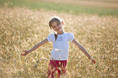 Summer in a meadow Royalty Free Stock Images