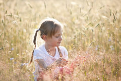 Summer in a meadow Royalty Free Stock Photos