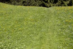 Summer meadow Royalty Free Stock Photos