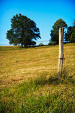 Summer meadow. Grass and trees at a meadow during a summer evening Royalty Free Stock Photography