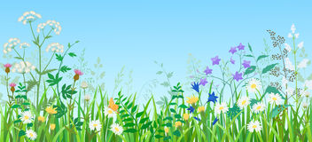 Summer meadow. Illustration of summer meadow with wild flowers and herbs Stock Images