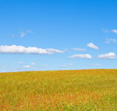 Summer meadow. And cloudy blue sky stock photo
