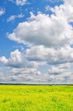 Summer meadow. And cloudy blue sky royalty free stock images