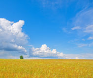Summer meadow. And cloudy blue sky royalty free stock photos