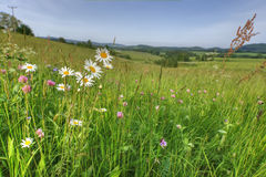 Summer-meadow. Flowers and herbs on a summer meadow Royalty Free Stock Images
