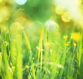 Summer meadow Royalty Free Stock Photography