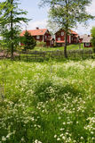 Summer meadow royalty free stock photos
