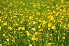Summer meadow background Stock Photography