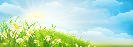 Summer meadow background Stock Image