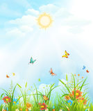 Summer meadow background Royalty Free Stock Photo