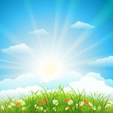 Summer meadow background Royalty Free Stock Photos