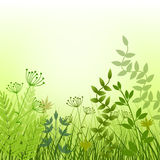 Summer meadow background Stock Images