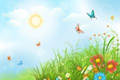 Summer meadow background. Summer sunny meadow with green grass, flowers and butterflies Stock Photography