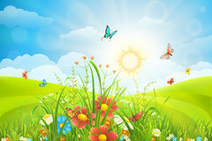Summer meadow background Royalty Free Stock Images