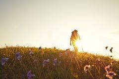 Summer meadow backlit Wanderer Stock Image