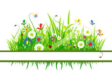 Summer meadow beautiful Stock Images