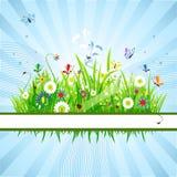 Summer meadow beautiful Stock Image