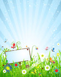 Summer meadow beautiful Royalty Free Stock Images