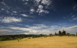 Summer meadow with beautiful blue sky. And forrest in the background Stock Photography