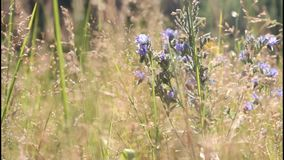 Summer meadow stock video