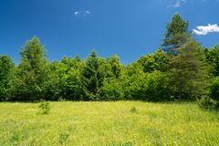 Summer meadow and blue sky Stock Images
