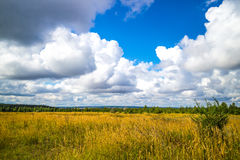 Summer meadow. On bright sunny day Royalty Free Stock Photography