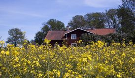 Summer meadow. Building behind a rape field Royalty Free Stock Photography