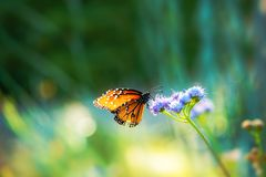 Summer Meadow Butterfly Royalty Free Stock Photography