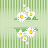 Summer meadow. Camomile frame Royalty Free Stock Images