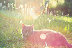 Summer meadow cat Stock Photo