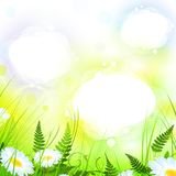 Summer meadow and copyspace frames Royalty Free Stock Image