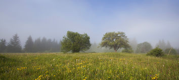 Summer meadow and deep blue sky Stock Images