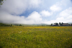 Summer meadow and deep blue sky Royalty Free Stock Images